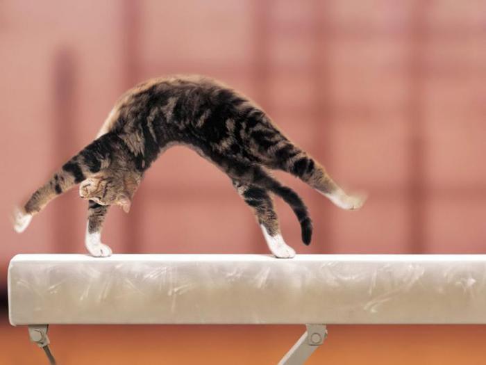Отдам котенка http://forums.drom.ru/vladivostok/t1151803600-p6.html#...