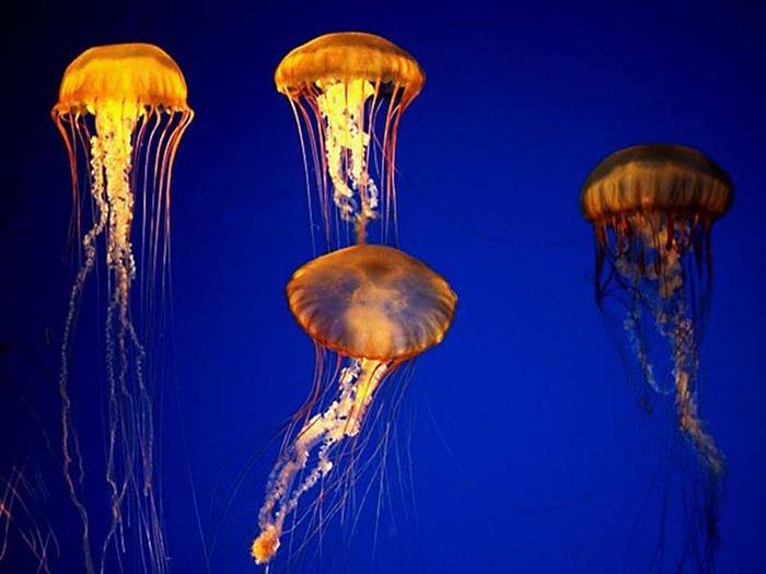 Видео секс с медузами в онлайн