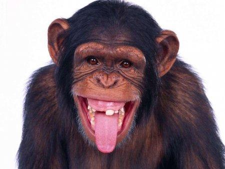 смешные фото обезьян фото