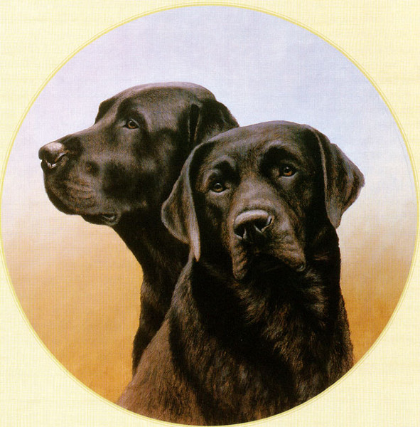 Portrait of Two Black Labs (591x600, 113Kb)