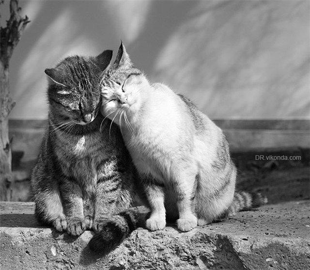 Конкурса открыток, картинки котов влюбленных с надписями