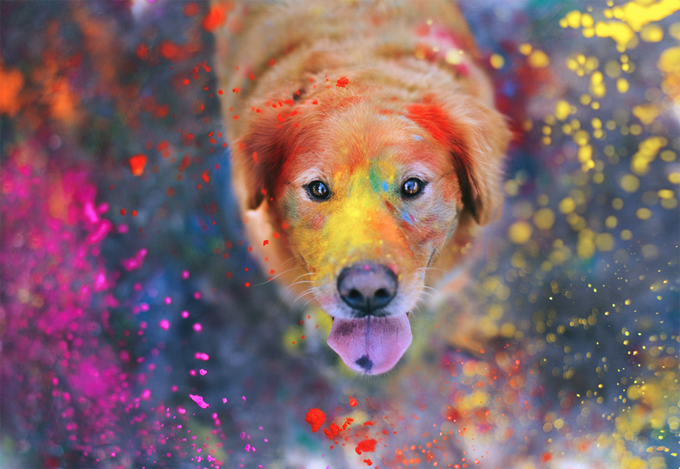 The-Explosion-of-Colors-4252-by-sprinkle-happiness (680x469, 548Kb)