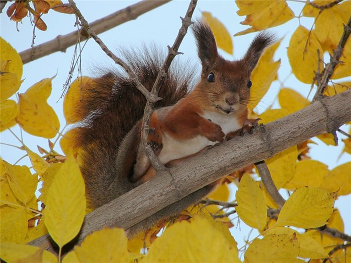 просто фото белки на дереве осень привлекают большое