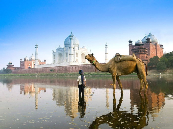 Скачать картинку индия, верблюд, тадж-махал, обоина номер - 2673.