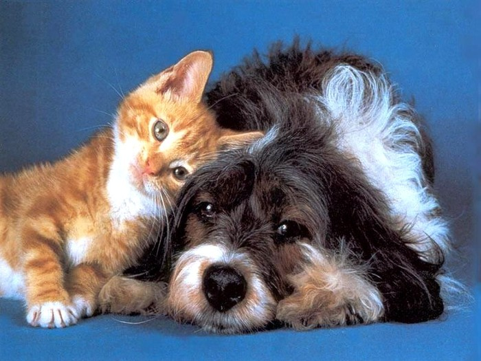 Animals_Dogs__001967_1 (700x525, 102Kb)