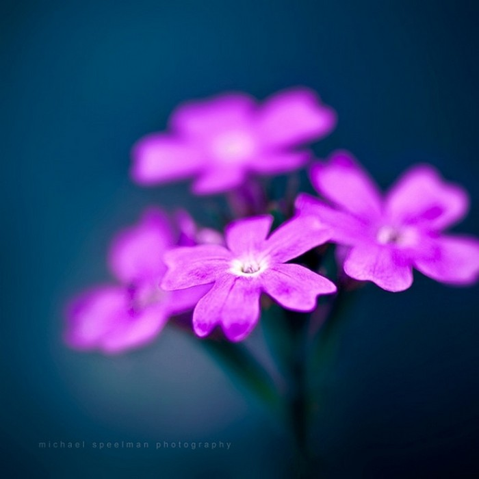 http://img0.liveinternet.ru/images/attach/c/4/79/923/79923656_Samuye_krasivuye_fotografii_cvetov_za_oktyabr_2011_2.jpg