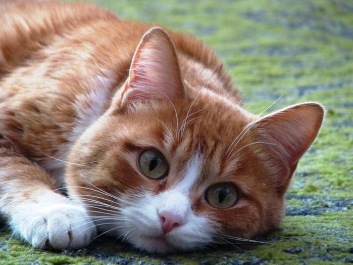 Кот - рецидивист - 85 фото