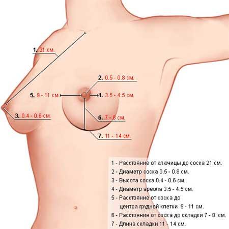 Женский сосок груди