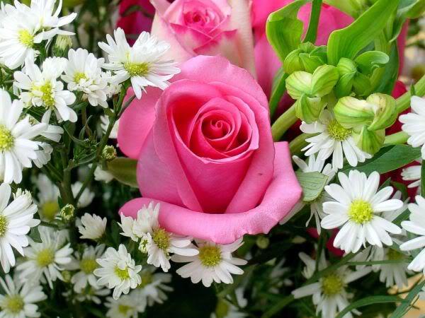 Картинки по запросу розы и ромашки