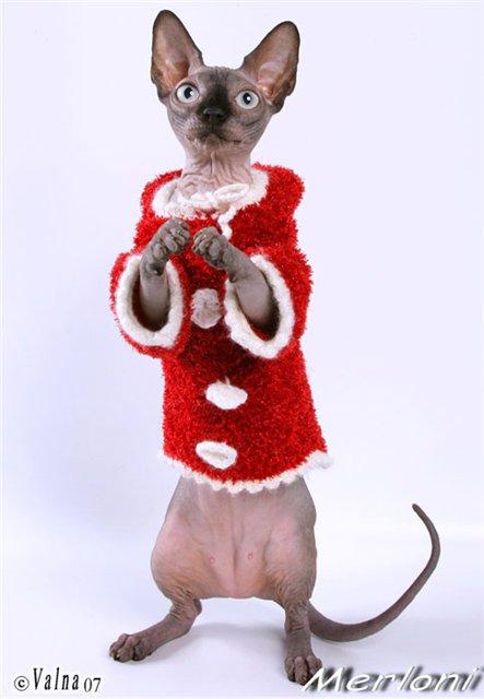 почему картинки сфинкс в новогоднем костюме павла был дом
