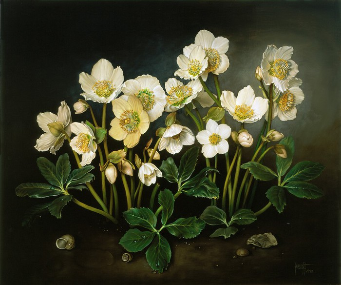 CHRISTMAS ROSES 51X61 cms oil on canvas on panel 1998 (700x584, 100Kb)