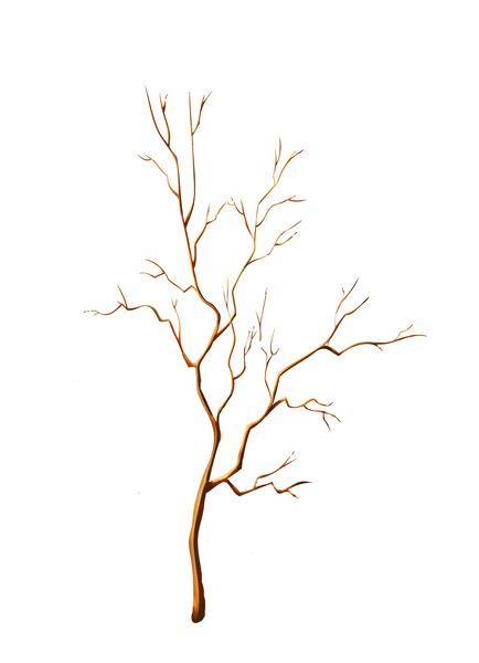 картинка веточка дерева без листьев