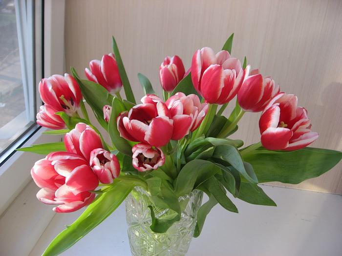 Тюльпаны фото букетов дома, оптовая