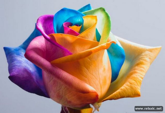 Rainbow_Flowers_010 (640x438, 33Kb)