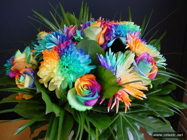 Rainbow_Flowers_022 (640x480, 64Kb)