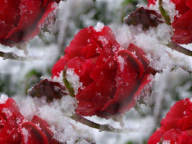 Цветы на снегу картинки анимация
