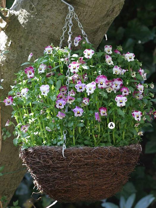 Фото и названия цветов для подвесных кашпо
