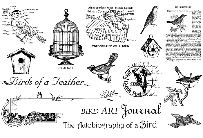 4287072_BIRDS_OF_A_FEATHER_STAMP_SET (700x475, 147Kb)