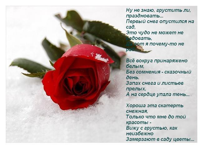 уже картинки розы с красивыми стихами очень