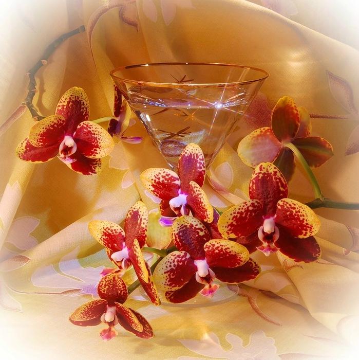 Красивые открытки с днем рождения орхидея