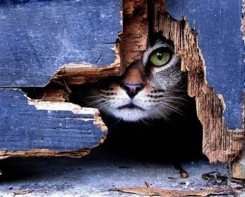 79290397_cat_peeking_from_hole (490x394, 62Kb)
