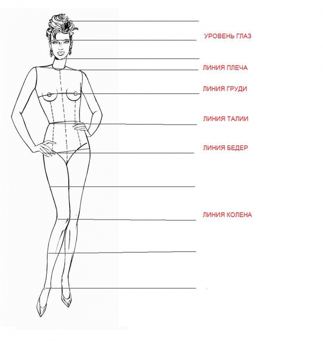 модельные пропорции