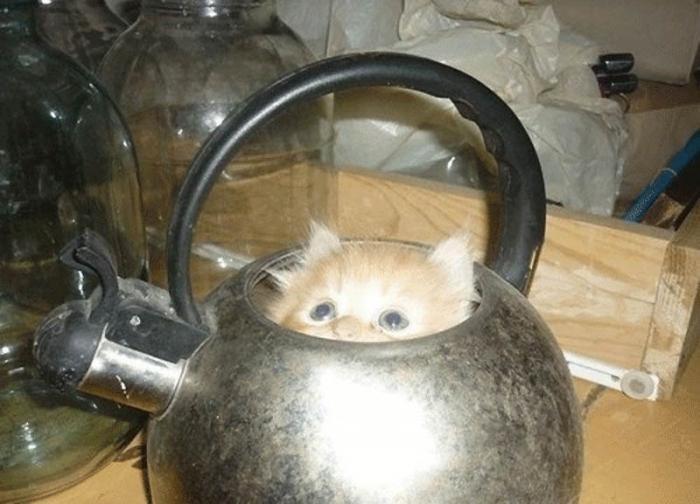 Картинки по запросу Жидкие коты
