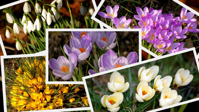 Весенние картинки тюльпаны мимоза подснежники, надписью люблю спорт