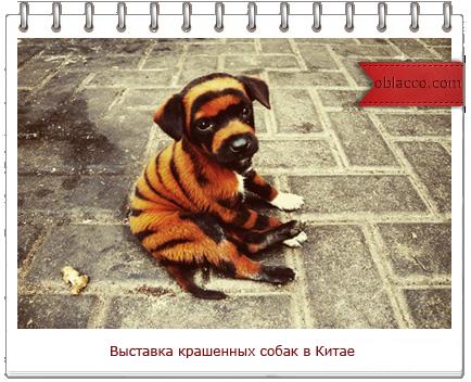Выставка крашенных собак впервые прошла в Китае