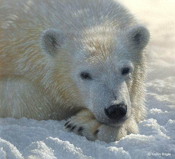 polarbearcub (600x545, 125Kb)