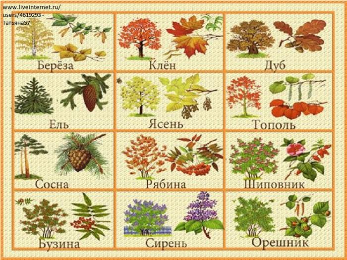 Тема недели деревья кустарники