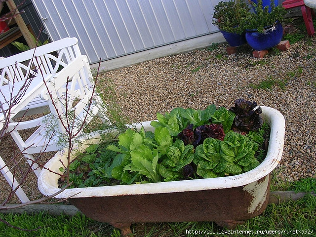 Bathtub-plants (640x480, 375Kb)