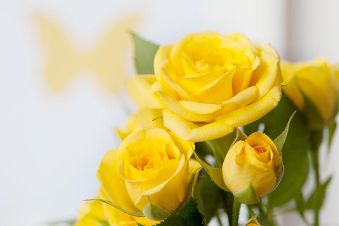 мест поздравительные открытки желтые цветы запросу