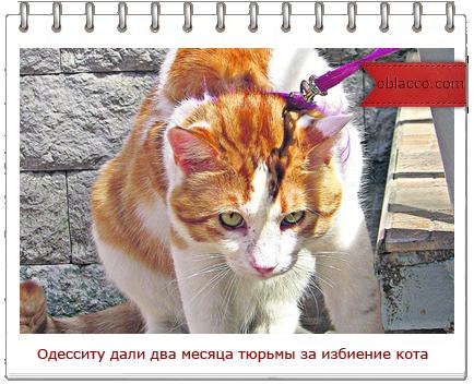 Одессит за избиение кота получил 2 месяца тюрьмы