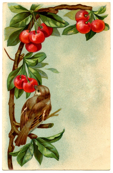 bird-cherries-images-Graphics-Fairy2 (1) (456x700, 284Kb)