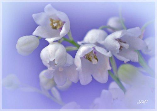 Магия цветов лилия