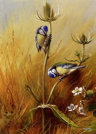 Thorburn_Archibald_Bluetits_On_A_Teasel (369x512, 86Kb)