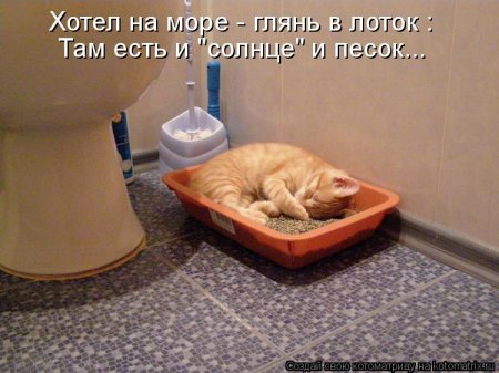 кошки солнце котоматрицы