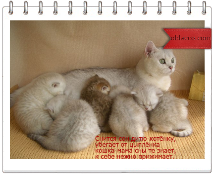 кошка мама/3518263__ (434x352, 218Kb)/3518263_koshka_mama (434x352, 217Kb)