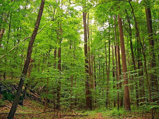 Видео щупает в лесу