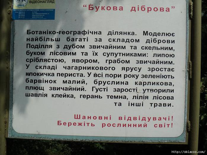 магнолия ботсад киев 2012