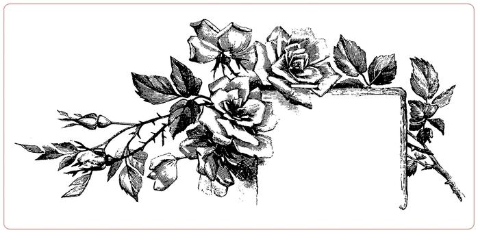 Черно белая роза рисунок