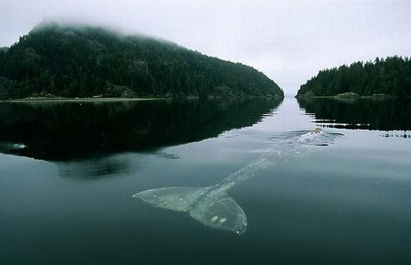 1герцовый кит (600x387, 21Kb)
