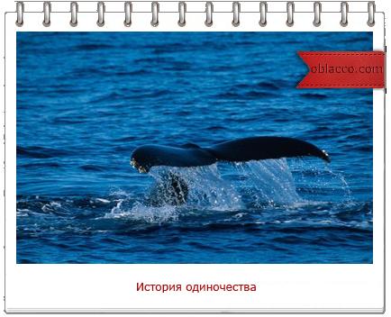 52 герцевый кит