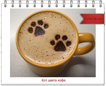 3518263_kot (434x352, 215Kb)