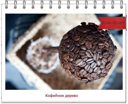 Мое кофейное дерево в горшке из бобины от скотча