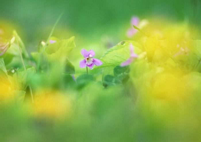 Ванильные фотографии цветов от Sozaijiten 8 (700x496, 41Kb)
