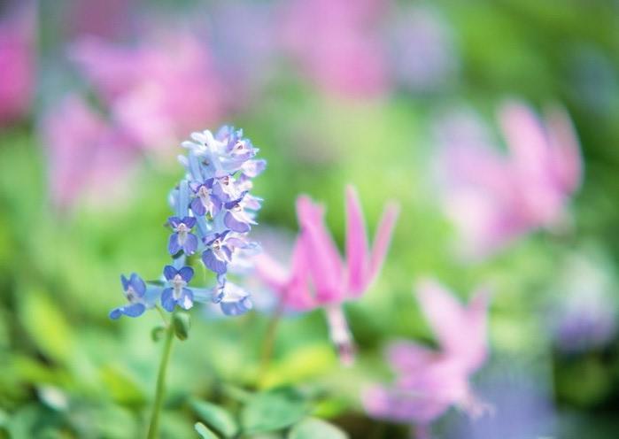 Ванильные фотографии цветов от Sozaijiten 17 (700x496, 48Kb)