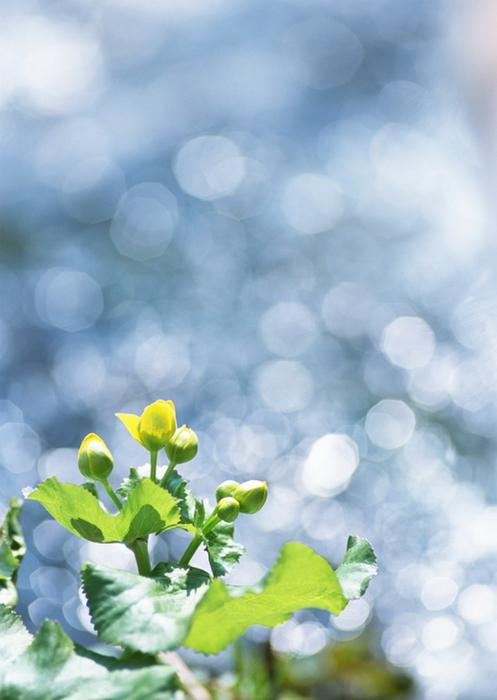 Ванильные фотографии цветов от Sozaijiten 25 (497x700, 275Kb)