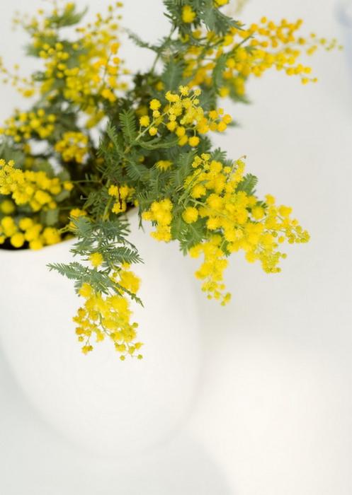 Ванильные фотографии цветов от Sozaijiten 29 (497x700, 275Kb)